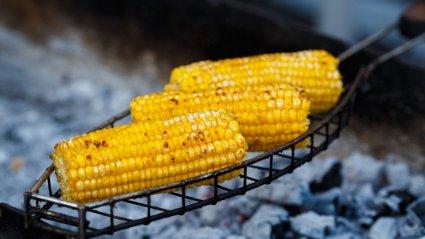 Tõlvikuid tuleb grillida, kuni need muutuvad täpiliseks ja on läbinisti kuumad.